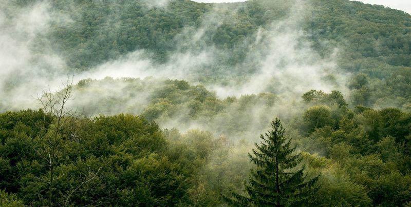 planine/jastrebac/jastrebac-011.jpg